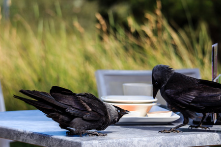 How Birds Can Drive Business Away from Your Restaurant